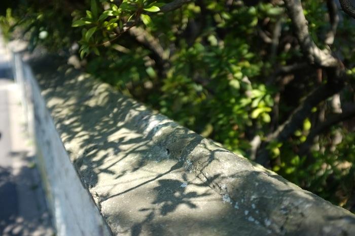 Ombre d'arbre sur un mur