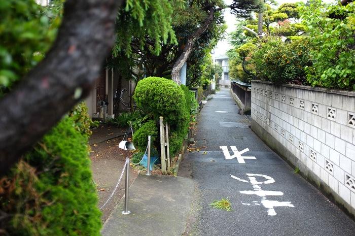 rues et végétation