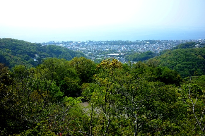 Forêt et Pacifique