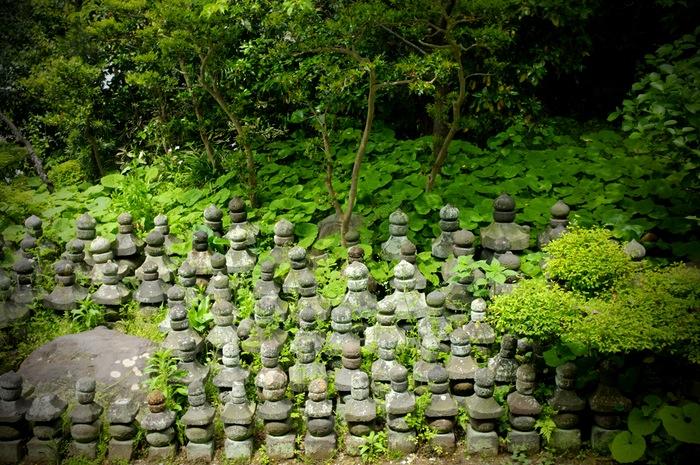 tombes envahies de végétation