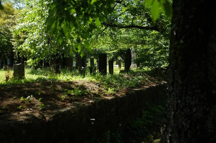 Tombes sous les arbres