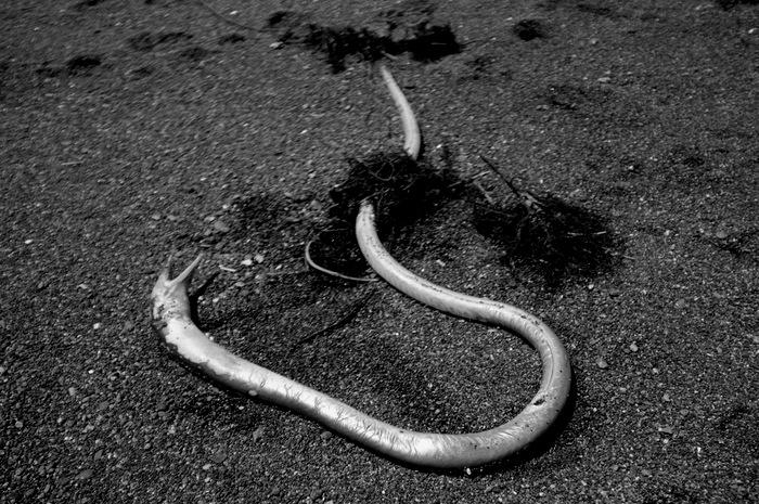 Poisson mort sur la plage