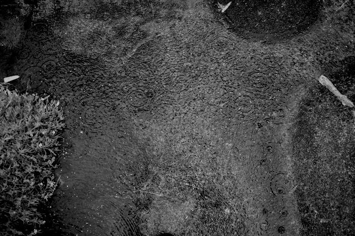 Ronds d'eau dans une flaque