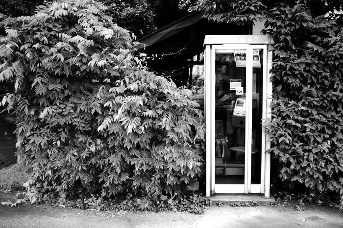Cabine téléphonique dans une haie