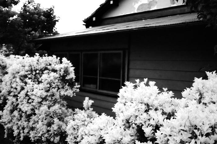 Haie de fleurs devant une maison