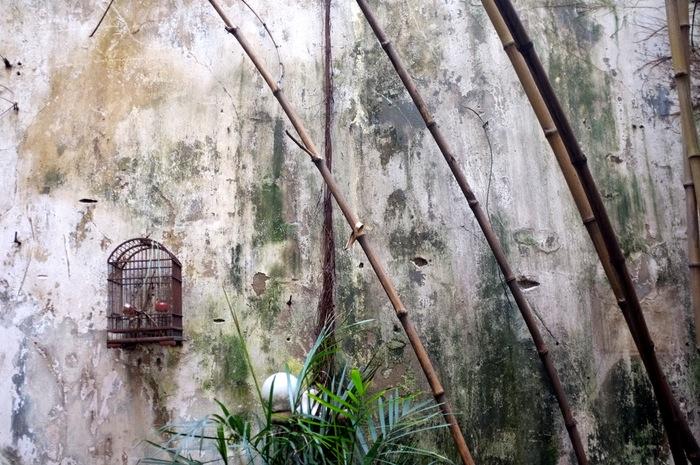 Cage d'oiseau et bambous