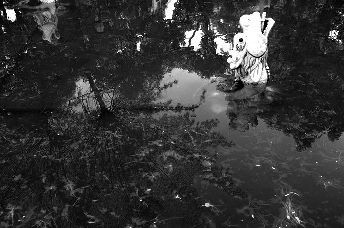tête de dragon émergeant de l'eau