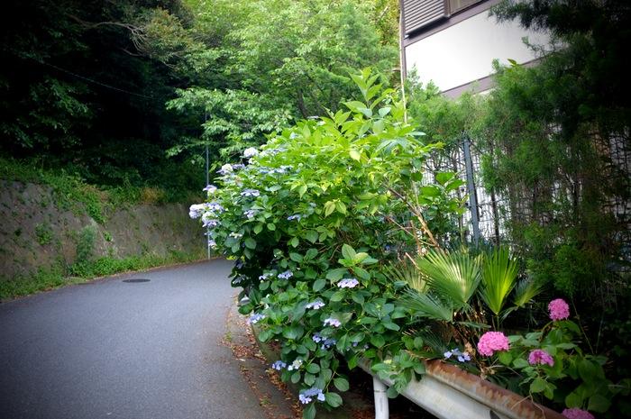 route bordée d'arbres et de fleurs