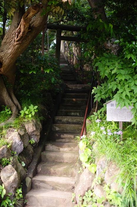 escalier et tori dans la végétation