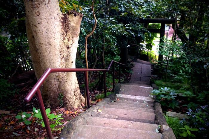 Escalier entre les arbres