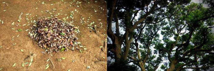 tas de feuilles et arbres