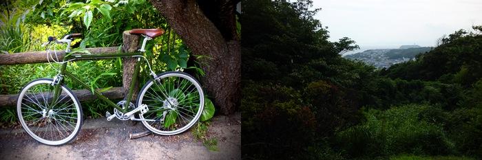 Vélo et paysage forestier