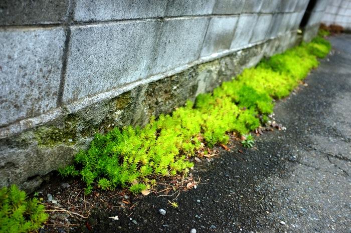 Végétation au pied d'un mur