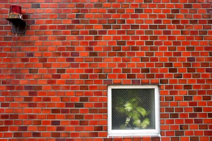 Plante derrière une vitre, mur rouge et gyrophare
