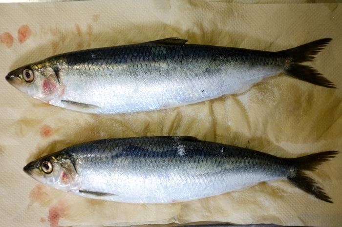 Deux poissons sur du papier