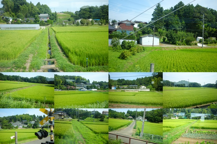 Vues depuis le train de champs de riz