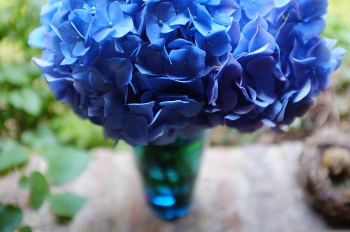 Hortensia bleu