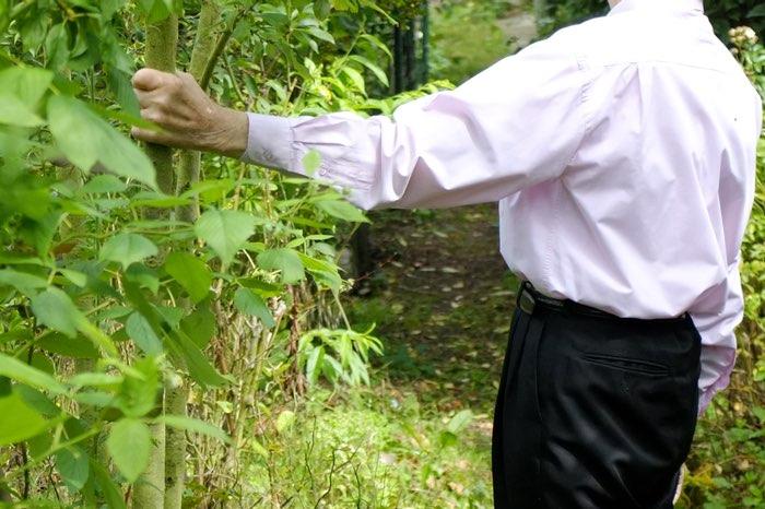 Main sur le tronc d'un prunier