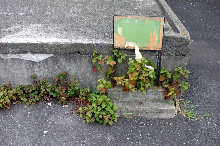 Panneau et plante