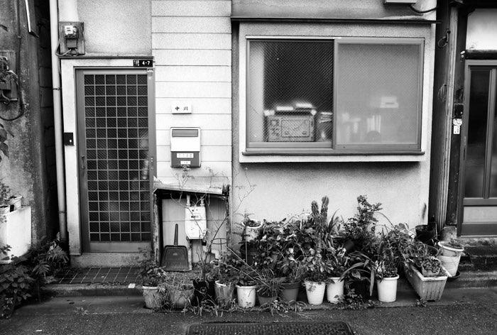 Plantes au pied d'une maison