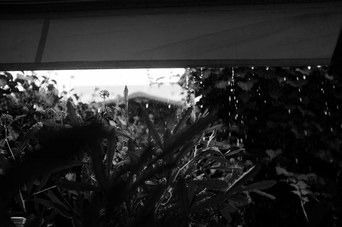 Pluie sur la végétation