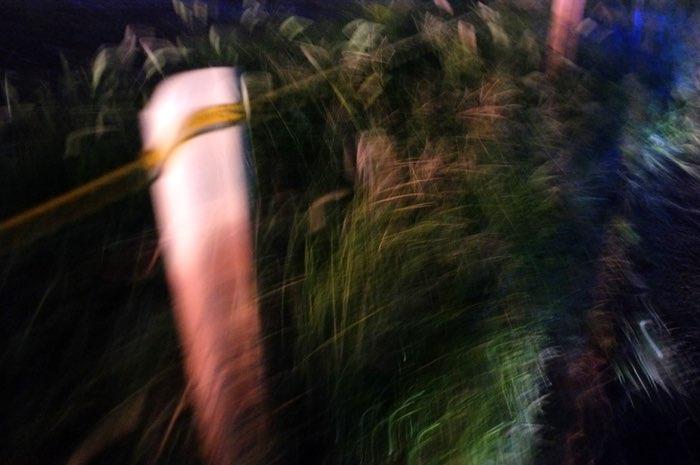 poteaux et herbes la nuit
