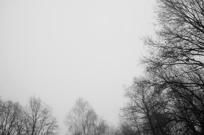 Brouillard et cime des arbres