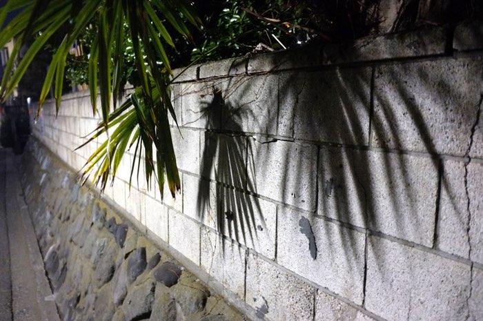 Plante et ombres sur le mur
