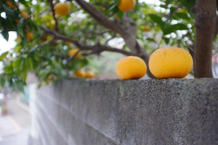 oranges sur un mur
