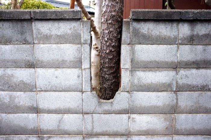 arbre visible dans la découpe d'un mur