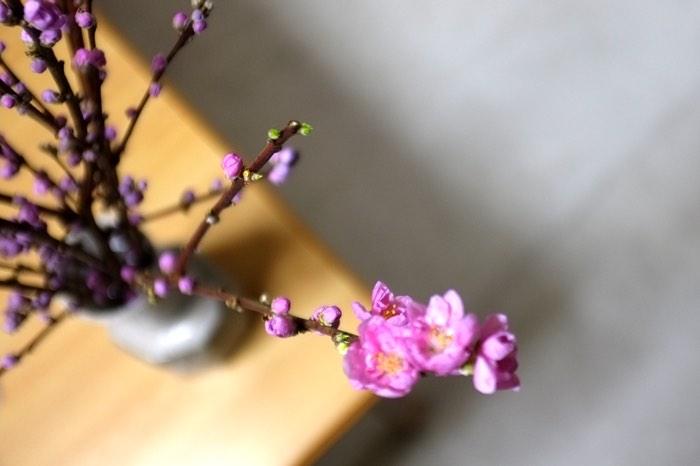 Branche de prunus en fleurs