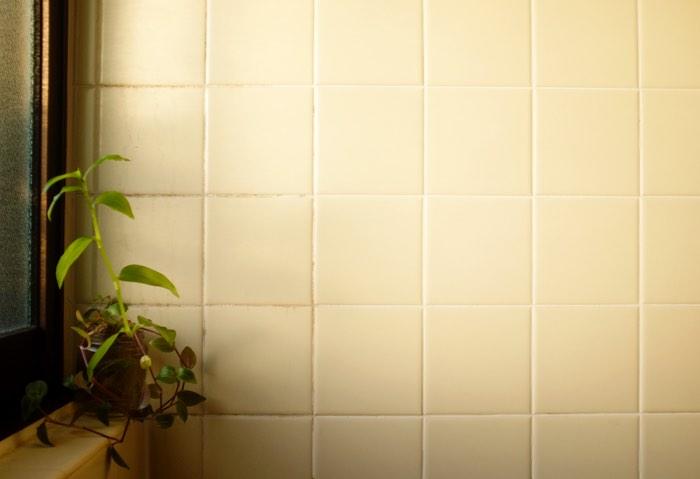 Plante et mur de céramique