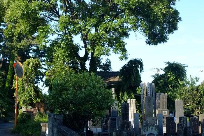 arbre et cimetière