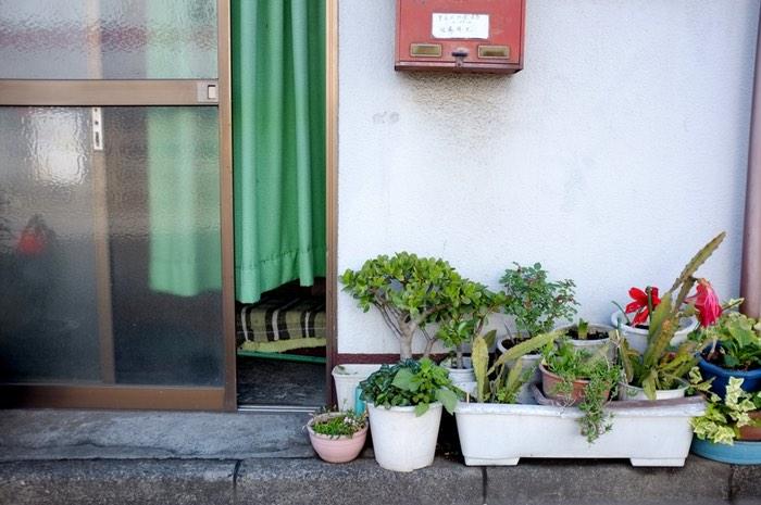 Plante devant une porte d'entrée