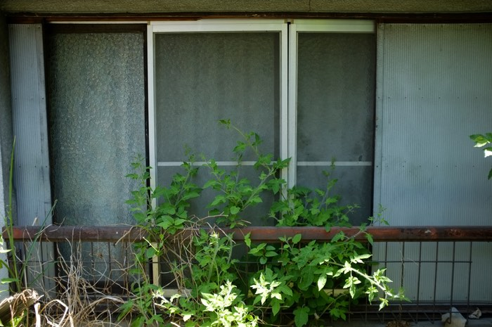 fenêtre et plante
