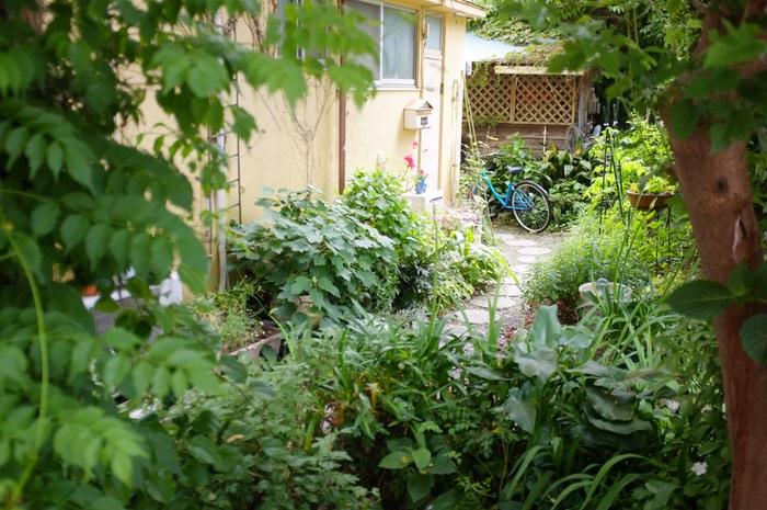 Plantes et végétation sur le chemin d'une maison