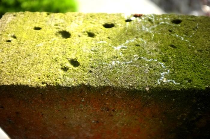 traces de limasses sur la mousse