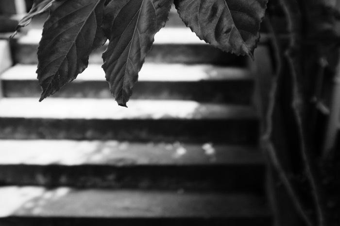 Feuille d'arbre et escalier
