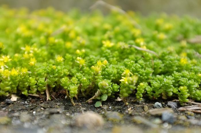 Petite plante en grand nombre