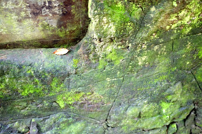 Une feuille morte sur un mur couvert de mousse