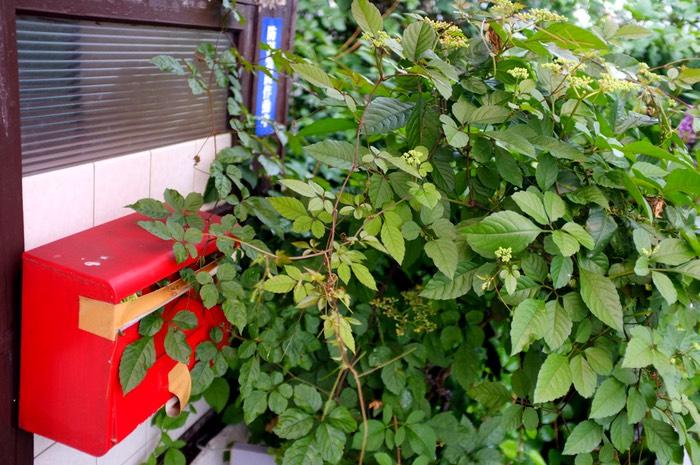 boite aux lettres envahie par la végétation