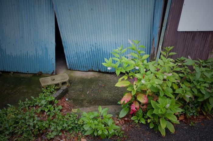 porte en métal bleue et végétation