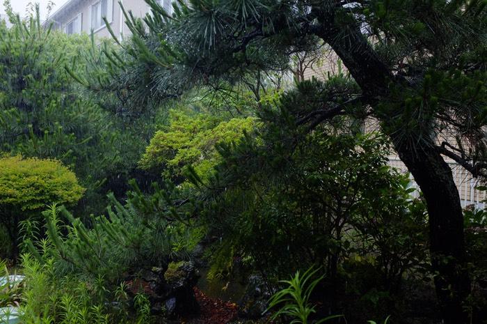 végétation sous la pluie