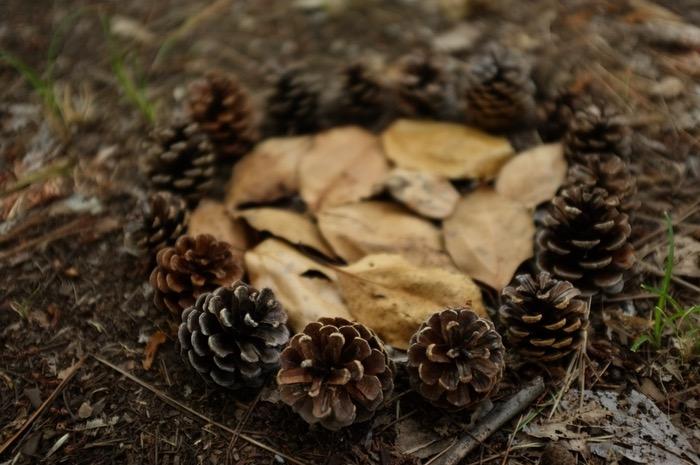 Pommes de pin en cercle avec feuilles au centre