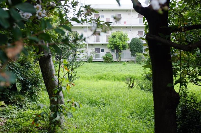 Herbes vertes entre les arbres