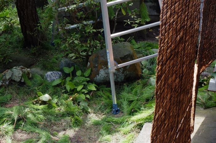 branches de pin au sol