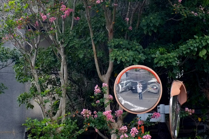 miroir de circulation et arbre fleuri