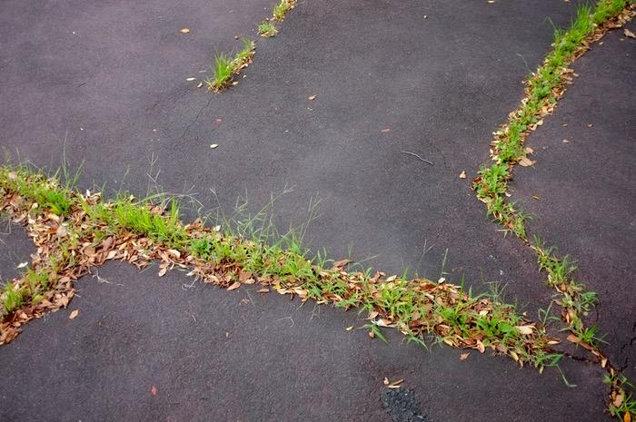 Herbe poussant dans le goudron