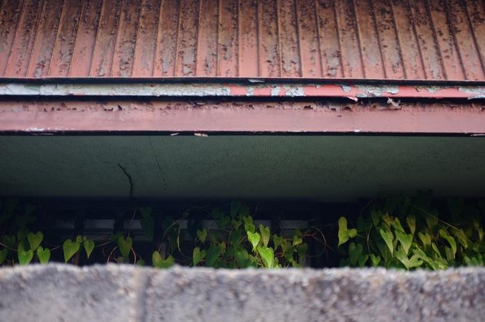 végétation derrière un mur