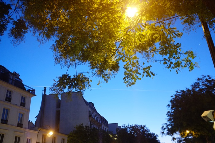 ciel du matin et arbres